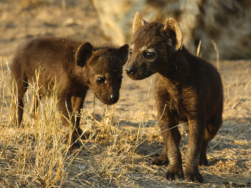 african safari photography tours