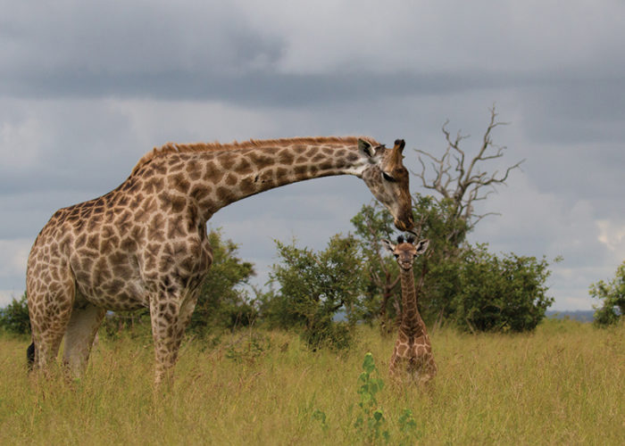 safari photography for beginners