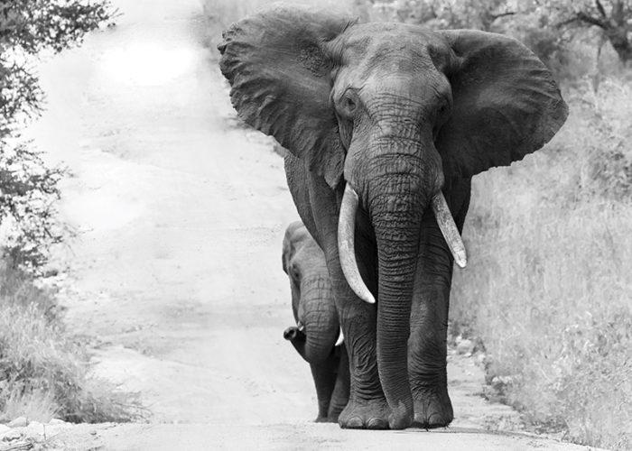 best african photo safari
