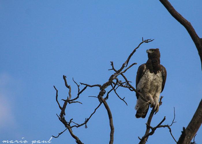kruger photo safari