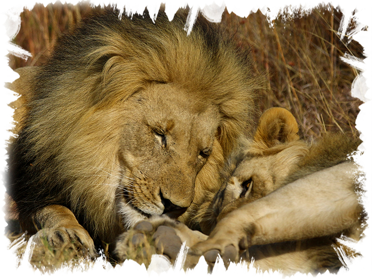 best african photo safari tours
