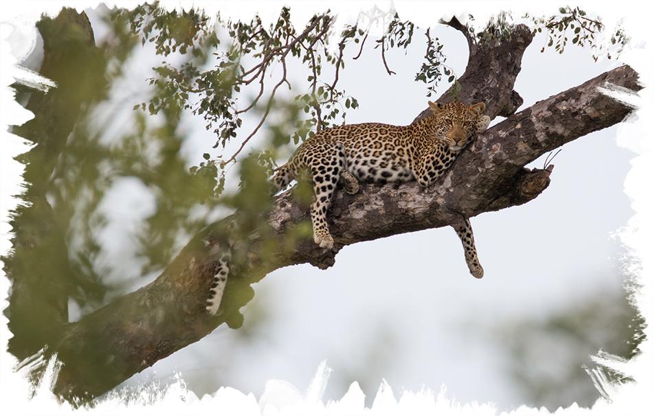 safari photography for beginners