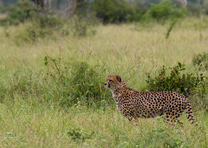 african safari photography tours